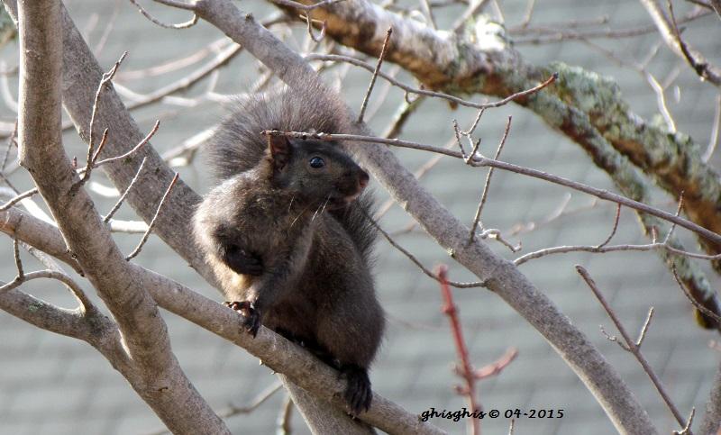 Histoire d'écureuil... Img_8212