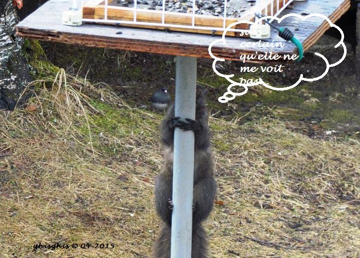 Histoire d'écureuil... Img_8213