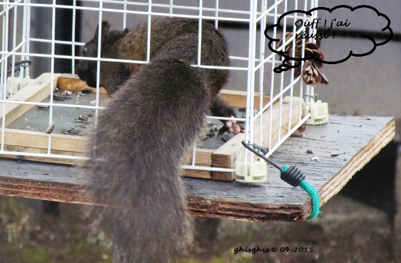 Histoire d'écureuil... Img_8214
