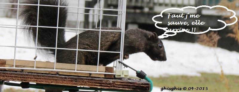 Histoire d'écureuil... Img_8311