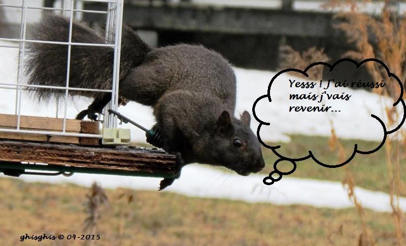 Histoire d'écureuil... Img_8312