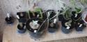 Commande plantes à caudex chez Audissou P1100128