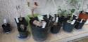 Commande plantes à caudex chez Audissou P1100129