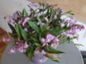 Dendrobium kingianum P1100132