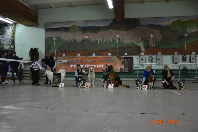 2-мая 2015 2х-CACIB -Минск-Белоруссия  Dsc_0054