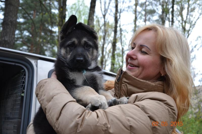 2-мая 2015 2х-CACIB -Минск-Белоруссия  Dsc_0433
