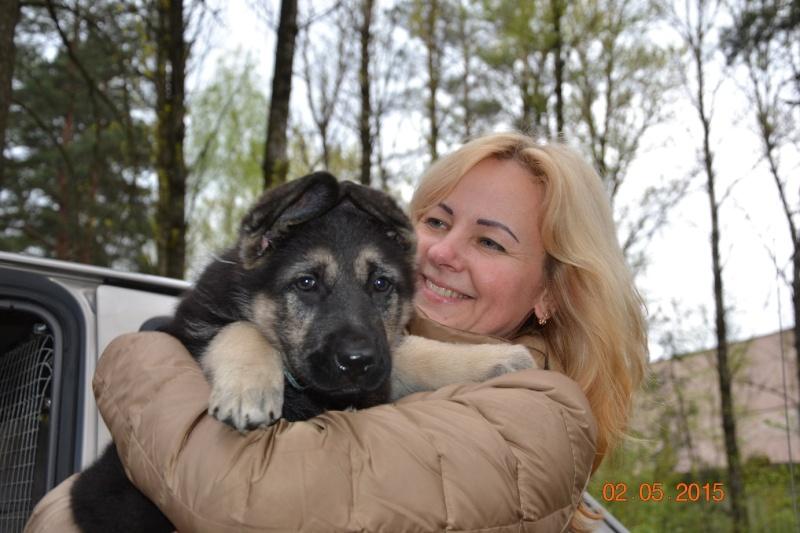 ВОСТОЧНО-ЕВРОПЕЙСКАЯ ОВЧАРКА VEOLAR LUVR Dsc_0454