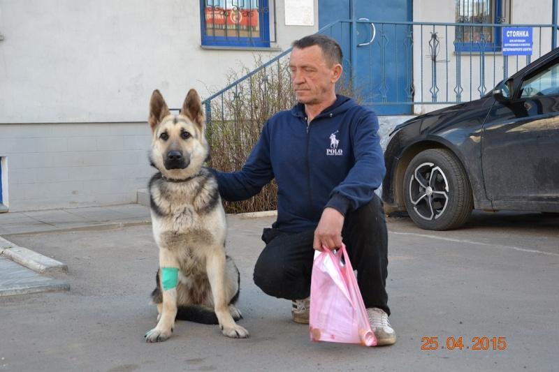 ВОСТОЧНО-ЕВРОПЕЙСКАЯ ОВЧАРКА ВЕОЛАР ЕСЕНИЯ Dsc_0545