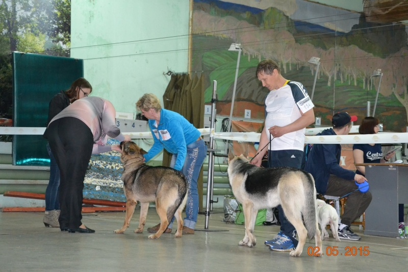 2-мая 2015 2х-CACIB -Минск-Белоруссия  Dsc_0550