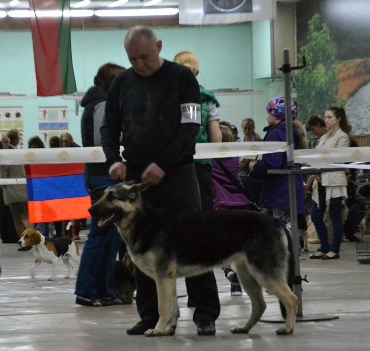 2-мая 2015 2х-CACIB -Минск-Белоруссия  Dsc_0553