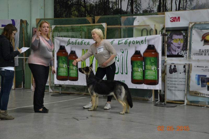2-мая 2015 2х-CACIB -Минск-Белоруссия  Dsc_0630