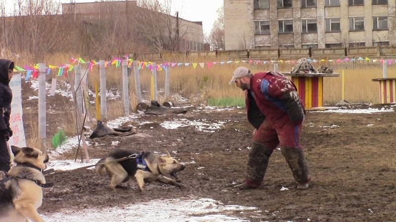 ВОСТОЧНО-ЕВРОПЕЙСКАЯ ОВЧАРКА ВЕОЛАР ДАРИНА - Страница 2 Img_0011