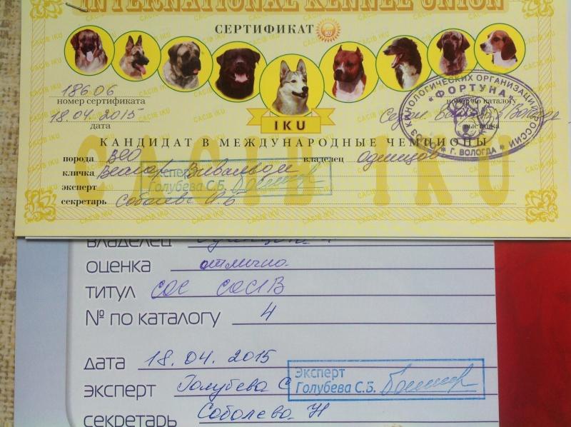 ВОСТОЧНО-ЕВРОПЕЙСКАЯ ОВЧАРКА ВЕОЛАР ВИВАЛЬДИ Oaia_113