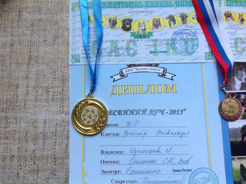 ВОСТОЧНО-ЕВРОПЕЙСКАЯ ОВЧАРКА ВЕОЛАР ВИВАЛЬДИ Oaia_115