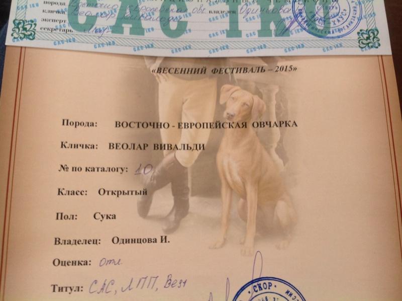 ВОСТОЧНО-ЕВРОПЕЙСКАЯ ОВЧАРКА ВЕОЛАР ВИВАЛЬДИ Oaia_911
