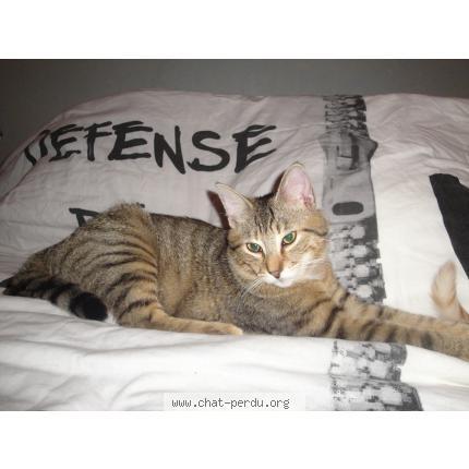 Tigrou, Chat mâle tigré 18248610