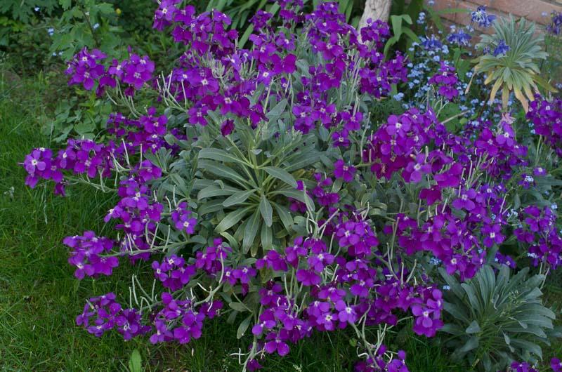 Vivaces au jardin - Karaba 2015 Matthi10