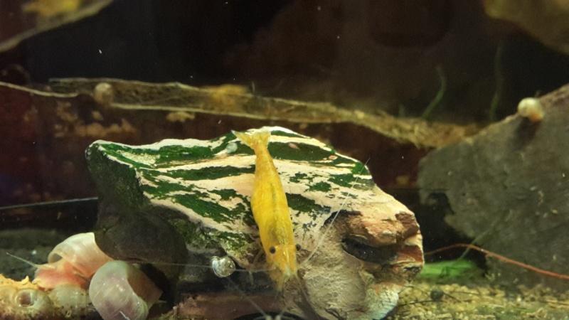 Bob's Shrimp - Page 11 2015-051