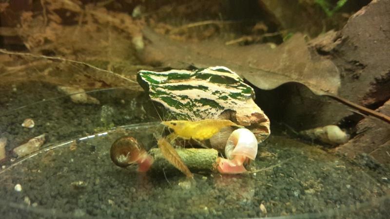Bob's Shrimp - Page 11 2015-064