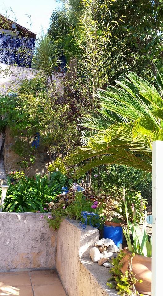 Vos plantes, fleurs, jardin !  10947310