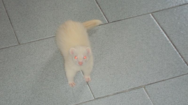 Pinkie, femelle albinos - Page 4 Dsc00012