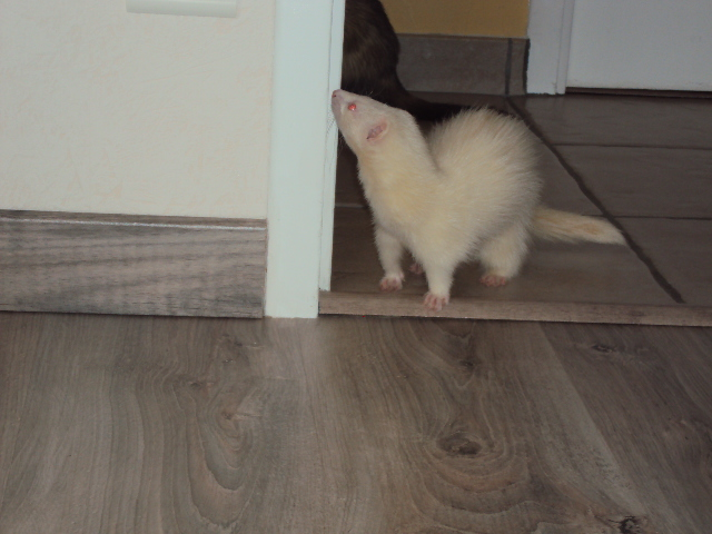 Pinkie, femelle albinos - Page 4 Dsc00113
