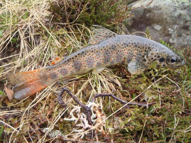 poissons d'ornement P5230410