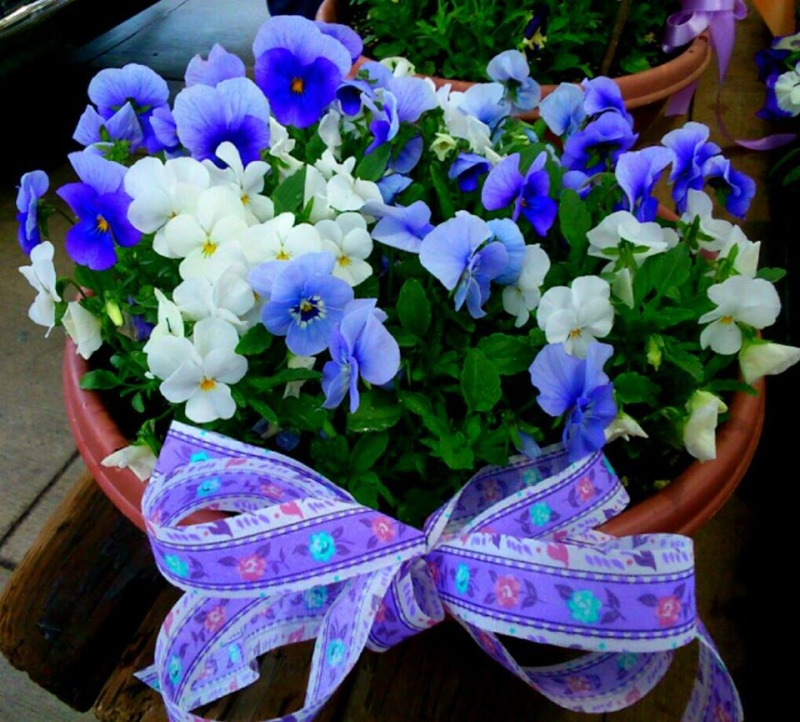 Flowershop 11083610