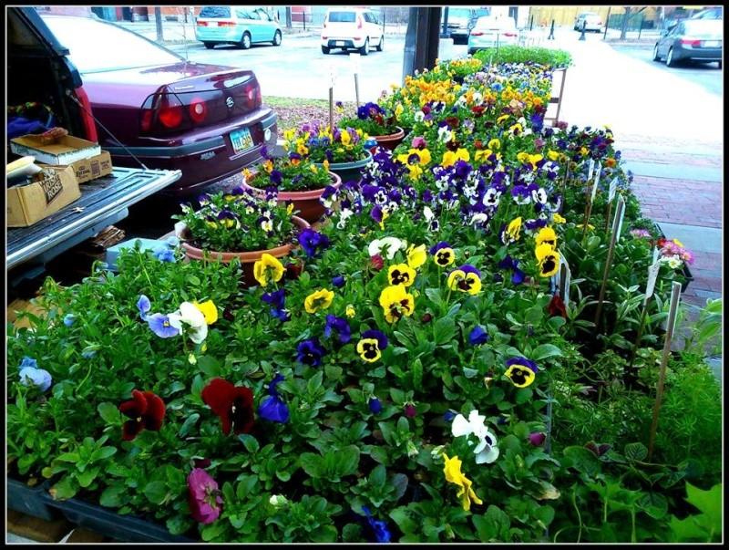 Flowershop 11133610