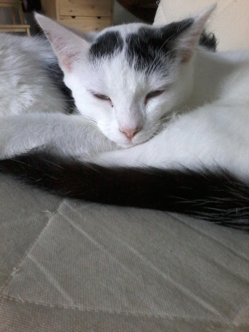 Max (ancien Jax), mâle type européen blanc et noir estimé né 01/08/2014 - Page 3 08910