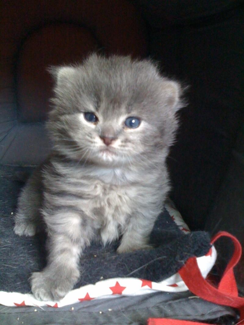 Lucky, mâle type européen gris né 16 mars 2015 Img_0212