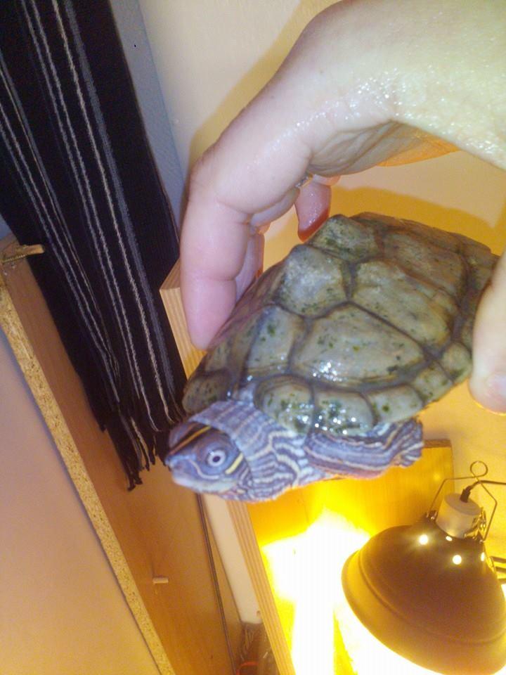 Débutant avec une petite tortue malheureuse :(  10659410