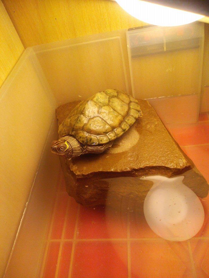 Débutant avec une petite tortue malheureuse :(  11100110