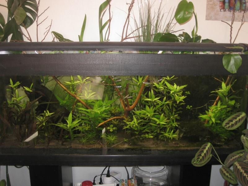 de l' aquarium au riparium Low_te12