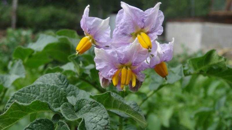 Quelles sont ces plantes ? 01212
