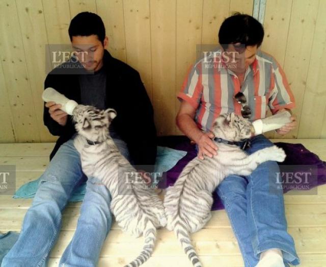 [Zoo d'Amnéville] TigerWorld Tg_210