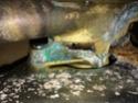 Question mécanique moteur : fuite pompe à eau de mer Img_2511
