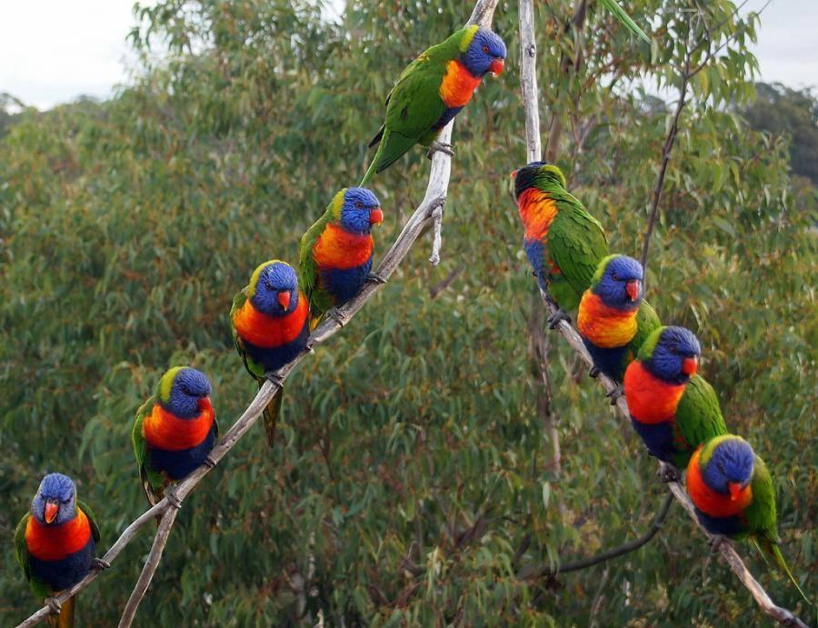 Des oiseaux et de la couleur 10410310