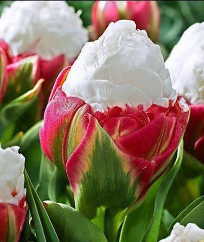 Des fleurs inhabituelles... pour le plaisir des yeux 11066510