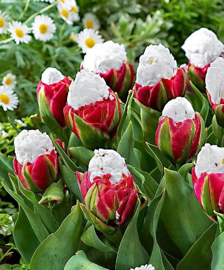 Des fleurs inhabituelles... pour le plaisir des yeux 11067910