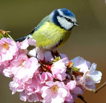 Des oiseaux et de la couleur 15096810