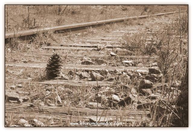 La Pointe de Grave vu par Forum du Médoc 10470910