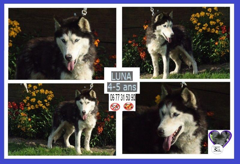 LUNA Husky 4/5 ANS pas ok chien URGENCE ROUMANIE  ADOPTEE - Page 2 Captur23