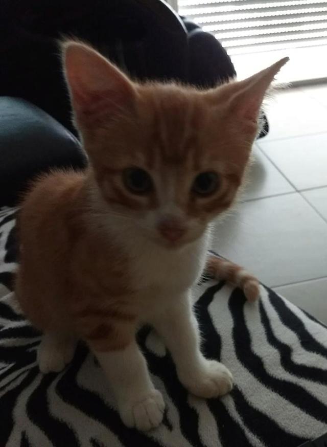 Voici Olaf..... 37564111