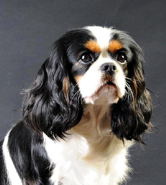 Quel est le chien préféré des Français? 7bdd4d10