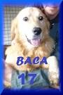 - FOURRIERE DE BACKA : NOUS DEVONS SAUVER LES CHIENS! 1 17_pm10