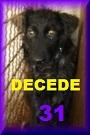 - FOURRIERE DE BACKA : NOUS DEVONS SAUVER LES CHIENS! 1 31_dcd10