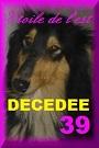 - FOURRIERE DE BACKA : NOUS DEVONS SAUVER LES CHIENS! 1 - Page 40 39a_dc10