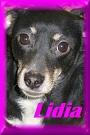 - FOURRIERE DE BACKA : NOUS DEVONS SAUVER LES CHIENS! 1 Lidia_10