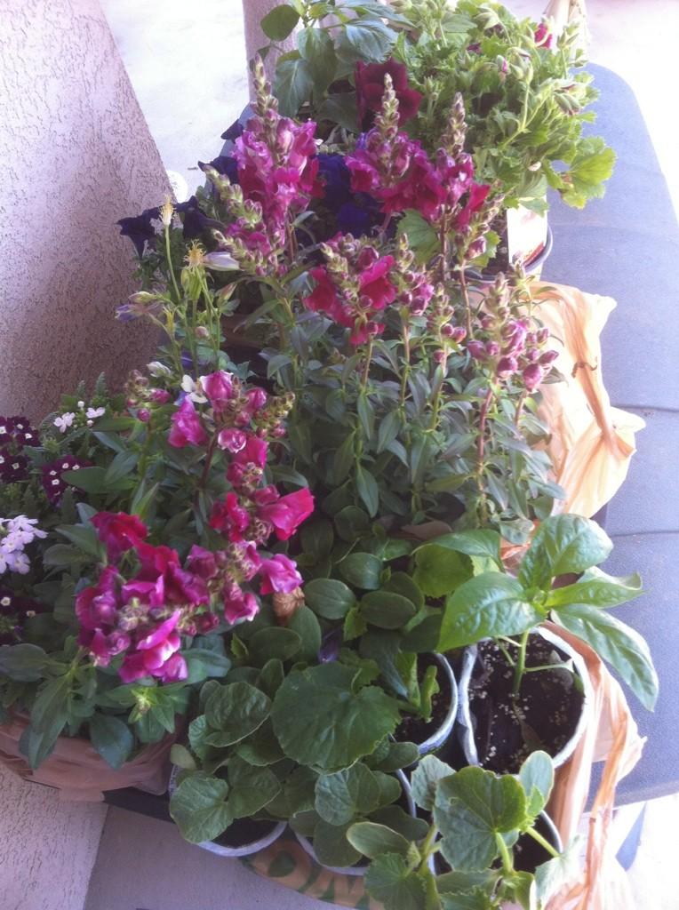 Home Depot Spring Black Friday Sale - $2.00 starter plants Sale_h10